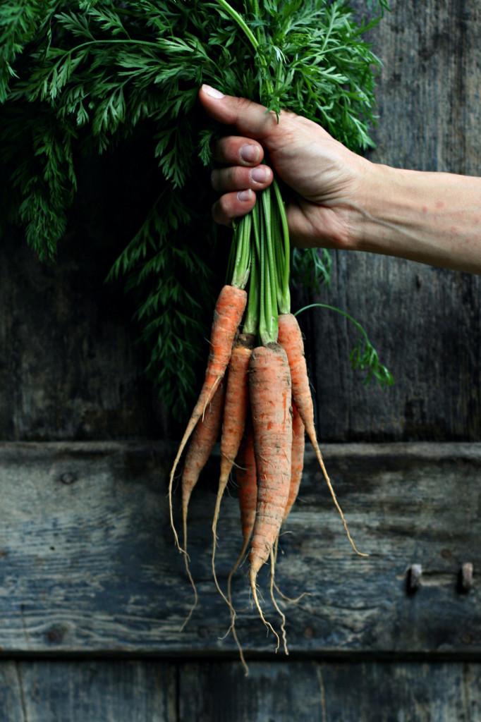 carote, orto