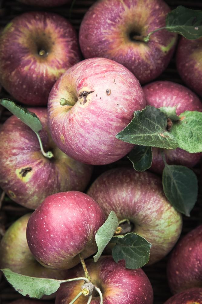 torta di mele antiche - heirloom apples cake-8