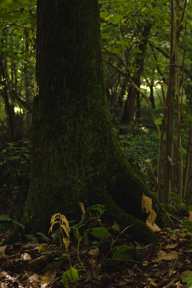 chestnut-forest-4