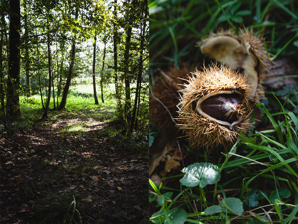 forest-chestnuts-1
