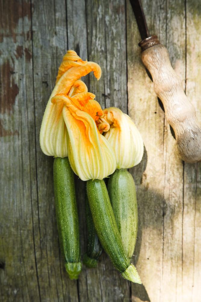 Zucchine novelle
